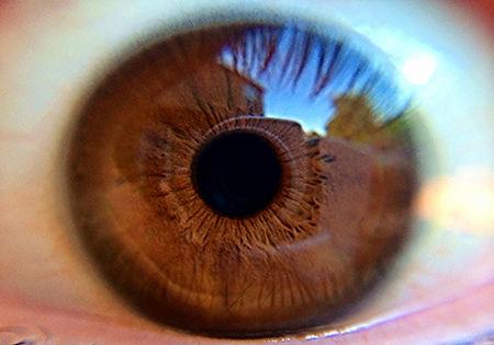 Brown Gros plan des yeux