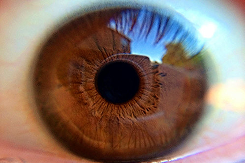 Basic Iris Analysis