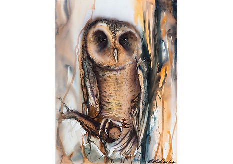 Owl I, Watercolour on paper, 70 x 52 cm