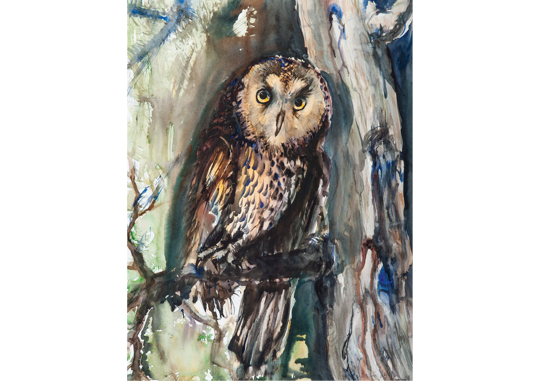Owl III, Watercolour on paper, 70 x 52 cm