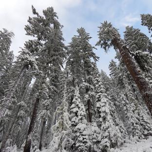 冬季環境研究