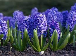 Der Frühling ist da, auf den Sommer müssen wir noch warten und uns noch etwas gedulden