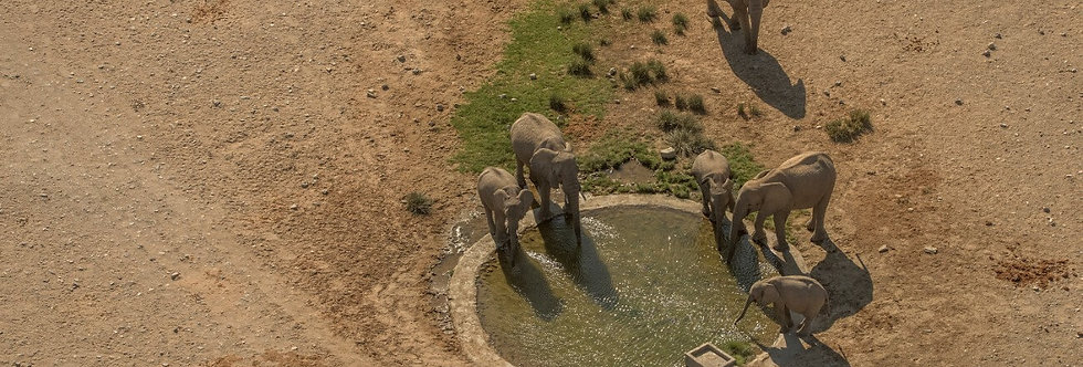 AFRICA ANIMALS XIII