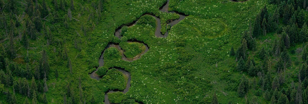 Small River, Kenai Peninsula, Alaska. July, 2016.