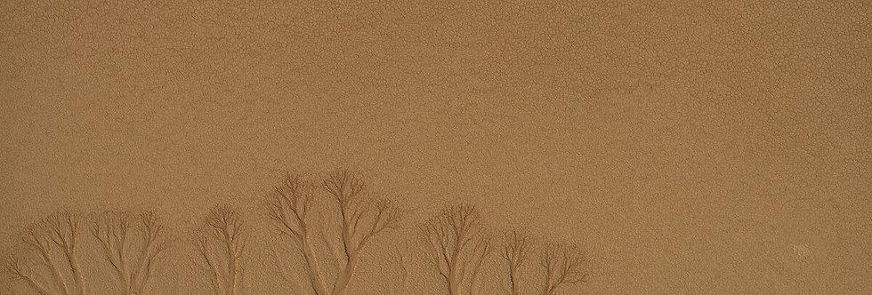 Desert Branches, Namib Desert, Namibia, Africa. August, 2015.