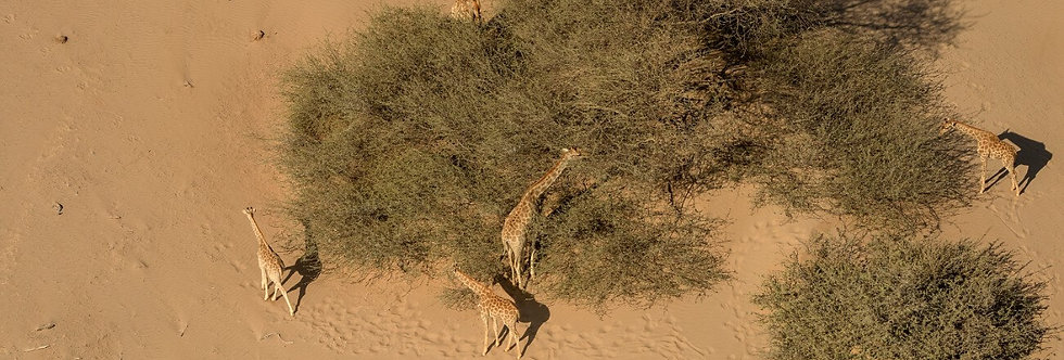 AFRICA ANIMALS XII