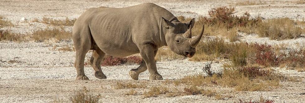 AFRICA ANIMALS X