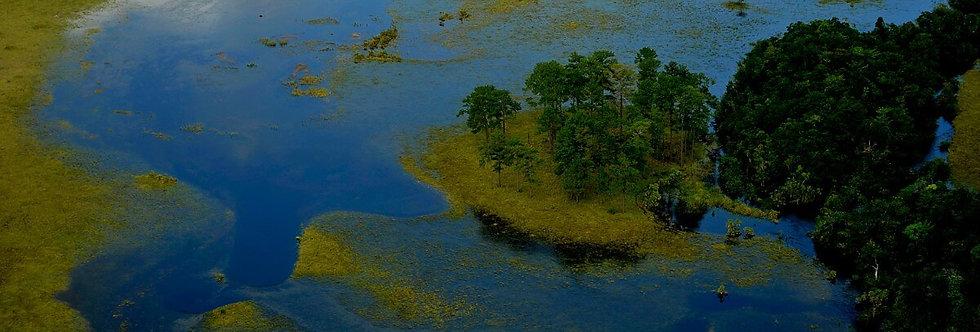 Island Of Trees, Mosquito Coast, Honduras. April, 2012.