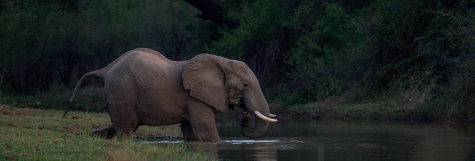 AFRICA ANIMALS III