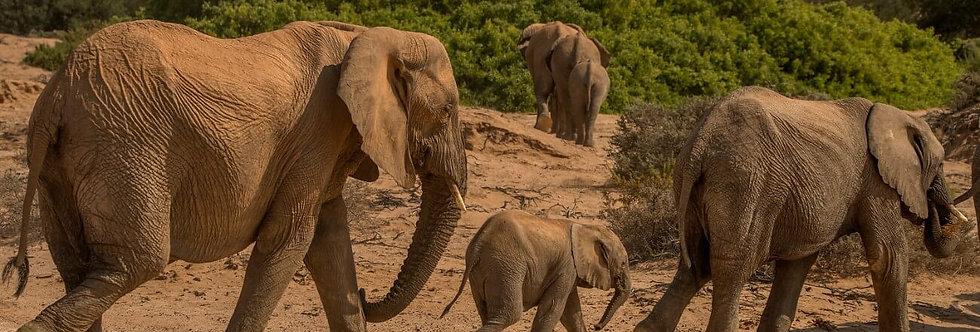 AFRICA ANIMALS XIV