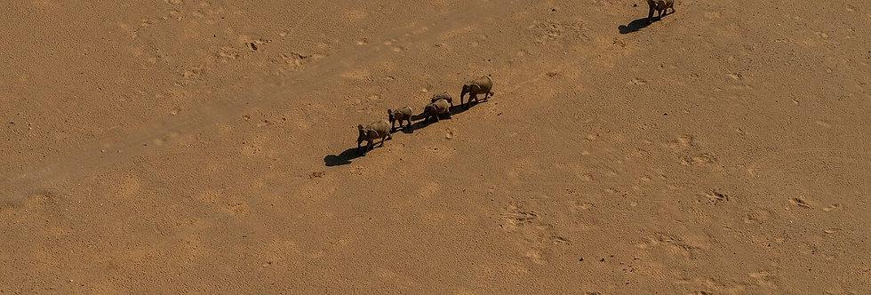 AFRICA ANIMALS I