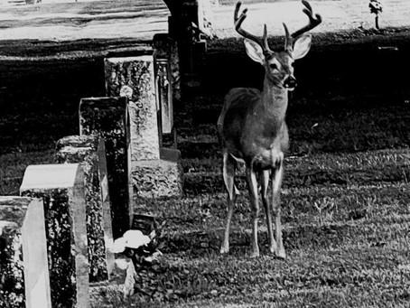Friday cemetery photo contest!