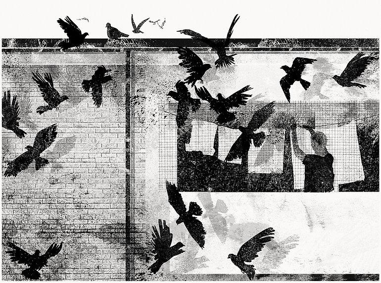 pigeonrooffinaladjustedweb.jpg