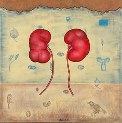 In The Garden: Kidneys