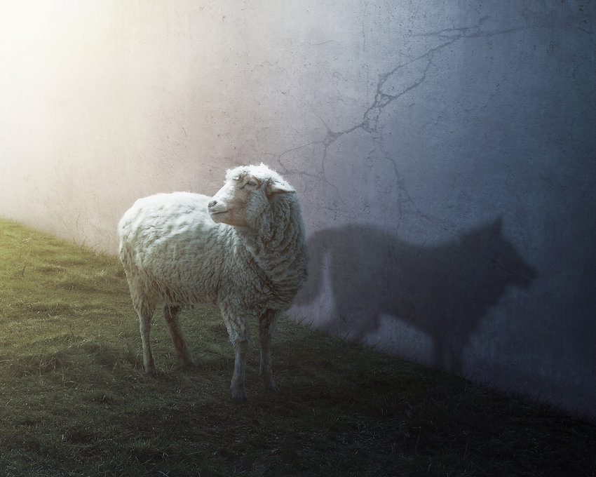A sheep with the shadow of a wolf.jpg