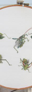 Gregarious Grasshoppers