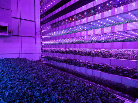 An introduction to vertical farming: sustainable food security for a changing world