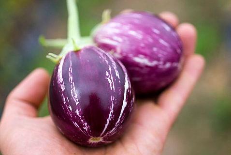 Fresh_Tomatoes-2.jpg