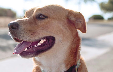 5 Best Dental Chews for Dogs + What Dangers to Look Out For