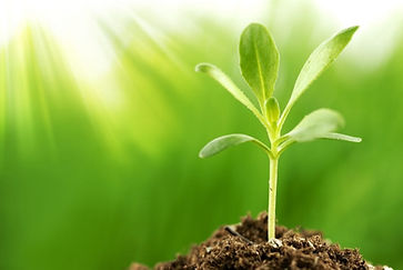 bigstock-Young-plant-growing-in-sunshin-