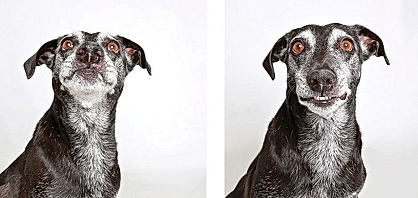 shelter-dogs-photo-booth_edited_edited_e