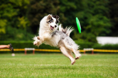 Dog Daycare at The Barksville Inn in Brooktondale, New York