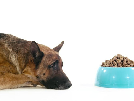 Kiss Kibble Goodbye: Homemade Dog Food Recipes