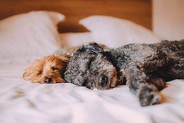 dog-sleeping-in-bed-comfortable.jpg