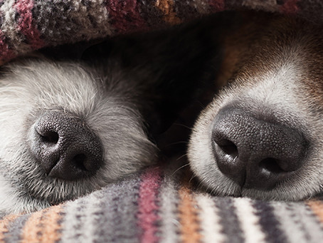 8 Ways to Exercise Your Dog This Winter