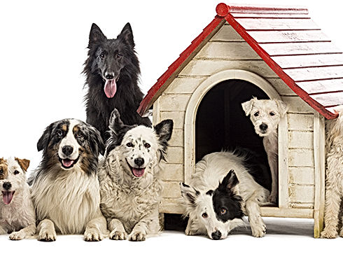 kennel_header.jpg