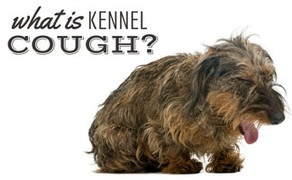What You Need to Know About Kennel Cough in Dogs!