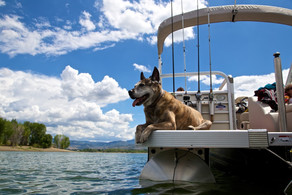 Taking Your Dog on a Boat: How to Set Sail Safely