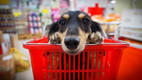 """Can I Bring My Dog?"" The Most Dog-Friendly Stores Across America"
