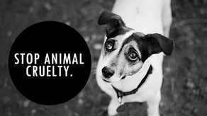 Animal Cruelty Facts: Laws, Stats And How To Report A Concern