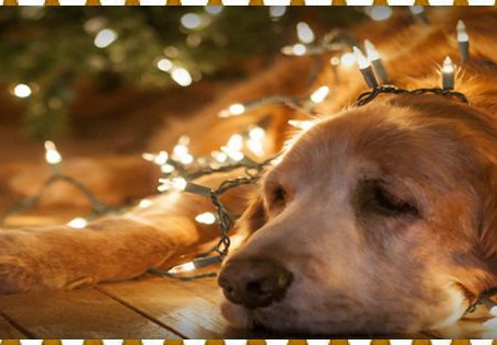 How To Dog-Proof Your Christmas Decorations