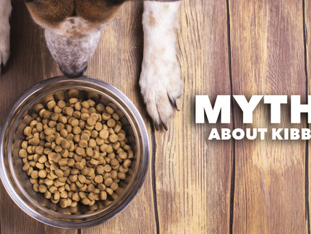 10 Surprising Myths About Dry Dog Food
