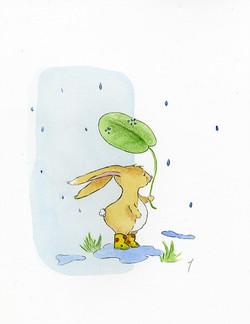Lapin sous la pluie
