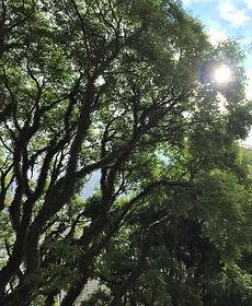 Psicanalise | Psicologia | Jardim Paulista | Luciana Kie – Psicanalista Jardins SP Sao Paulo
