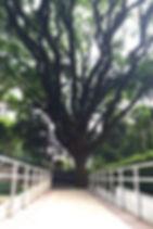 Clinica de Psicanalise SP Jardins - Paraiso | Jardim Paulista | Luciana Kie - Psicanalista