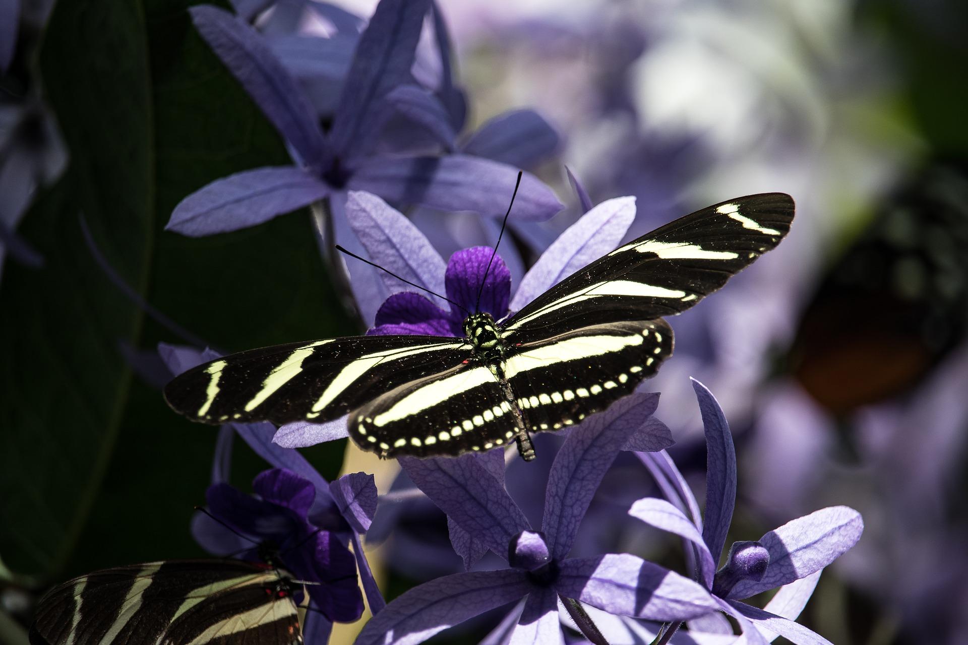 butterfly-4072574_1920
