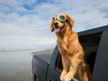 Road Trip Checklist for your Paw Buddy