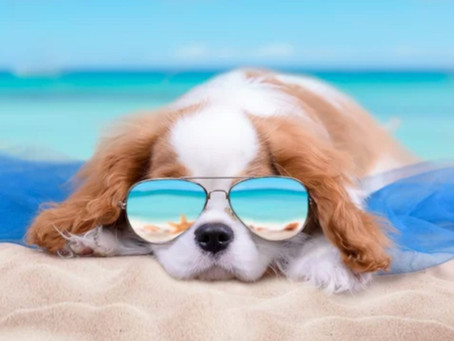 How to care for your dog in the Summers?