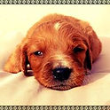 adopter un chien montpellier