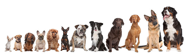 tarifs educateur canin montpellier