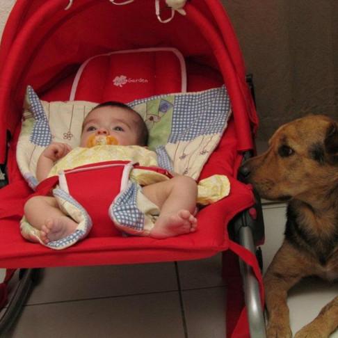 Préparer son chien à l'arrivée de bébé.