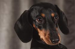 dog-1232449_1920
