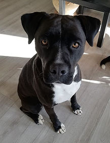 educateur canin montpellier comportementaliste staff