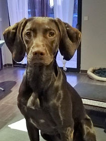 educateur canin montpellier comportementaliste pointer