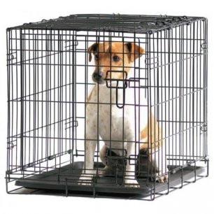 Ma vision de l'utilisation de la cage