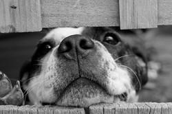dog-715545_1920